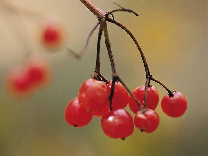 Fall Wallpaper For Computer Screen Autumn Photography Nuts Amp Wild Fruits Pictures 23